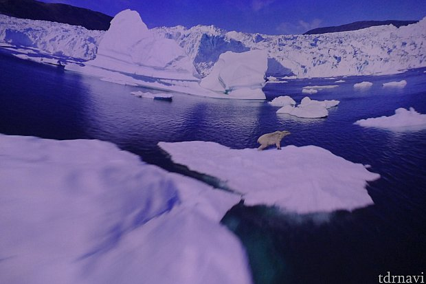 北極の世界。シロクマさん達が超絶可愛かった〜!とっても素敵な流氷の世界。