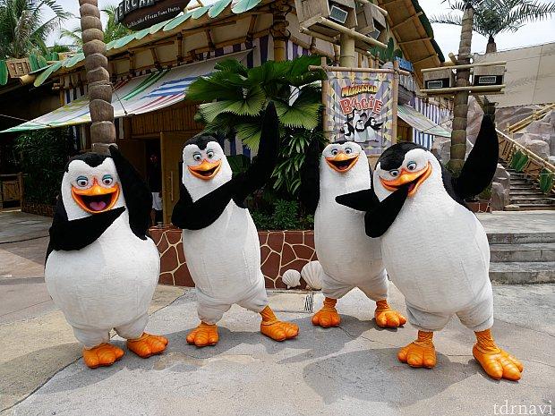 お店の横のステージではペンギンズとアレックス、グロリア、キングジュリアンがショー&グリーティングをしている時があります!