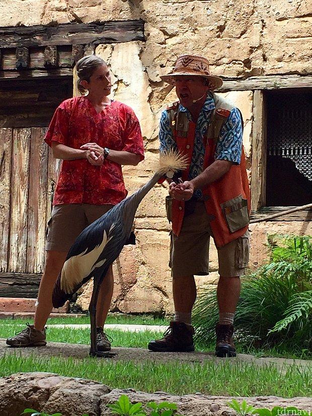 右側の方がガイドツアー役のキャストさん。ゲストと共に鳥類の事をここで学んでいきます。