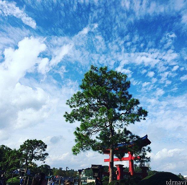 鳥居と青空と松の木、まるで日本にいるような感覚に陥りました。