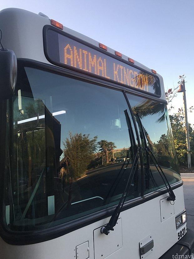 アニマルキングダム行きのバスが来ました♪
