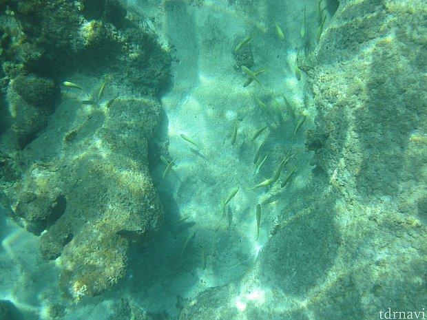 canonの水中コンデジで動画も撮りました