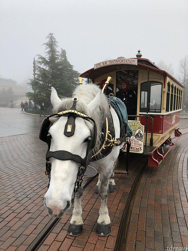 可愛らしい馬と触れ合うことができますよ!