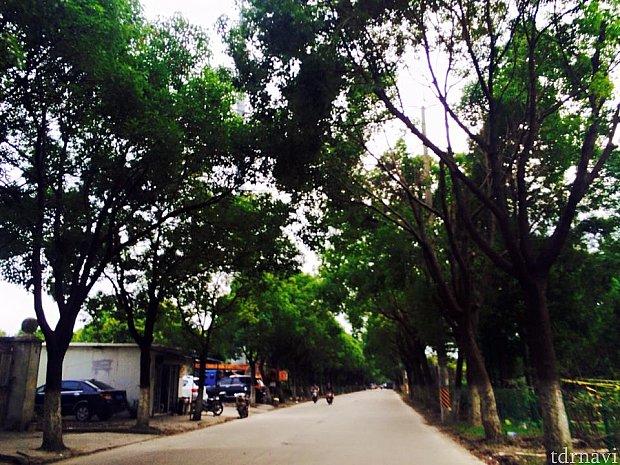 上海郊外の田舎道を走り回り、ディズニーの建設現場を探す。
