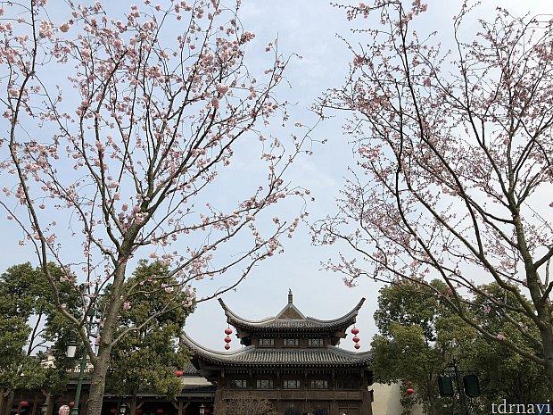 お向かいの干支モザイク画前は桜が咲いていました🌸