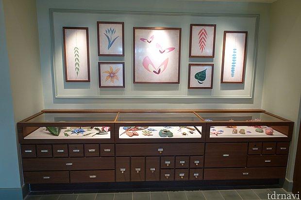 レストランの入口には、植物や昆虫の標本ケースがあります。もしかして、探検家ミニーのコレクション?