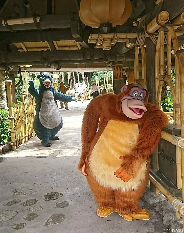 ポリネシアンテラス前でジャングル・ブックのキャラクターグリーティング。 キング・ルイ、王様の風格👑