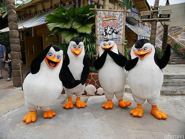 【グリーティング】 ペンギンズ全員と撮れるなんて😍
