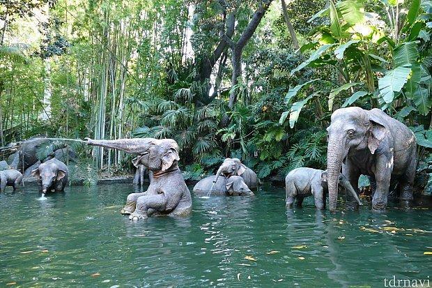 象の水浴び場。みんな気持ち良さそう〜!