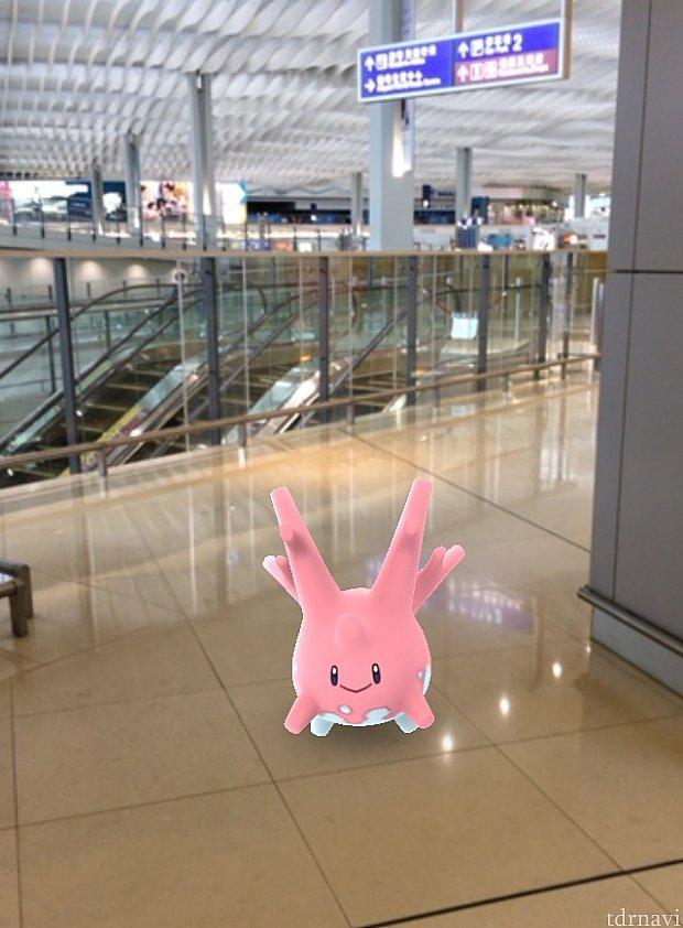 香港国際空港の第2ターミナルでサニーゴに遭遇!