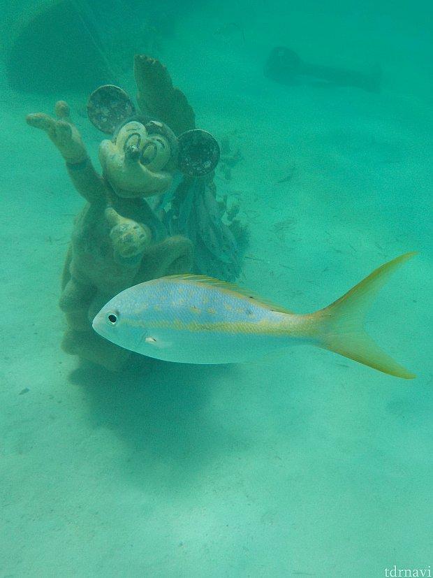 お魚も優雅に泳いでます。