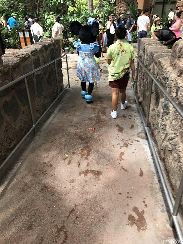 ミニーちゃん散歩中♪