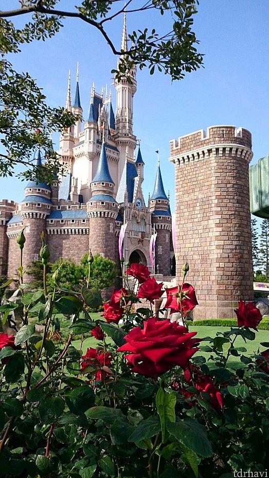 7:39時点で正面は1~2列目という感じでした。 この季節は薔薇が綺麗だったので、少しそれて撮影後、もう少しお城寄りに動きました。