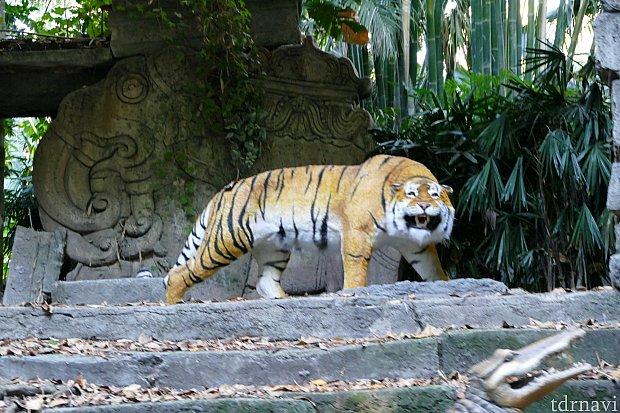 一番最初に発見する動物はなんとトラ!!!ひょえ〜〜〜!!!初っ端から大物発見です!!!