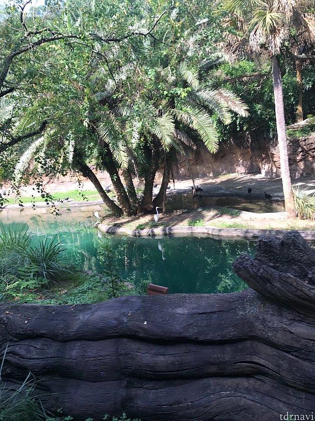 Safariを楽しみます。