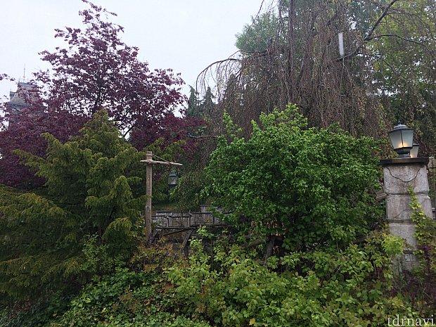 一見手入れしていない庭に見えますが、しっかり手入れが行き届いた美しい庭でした。