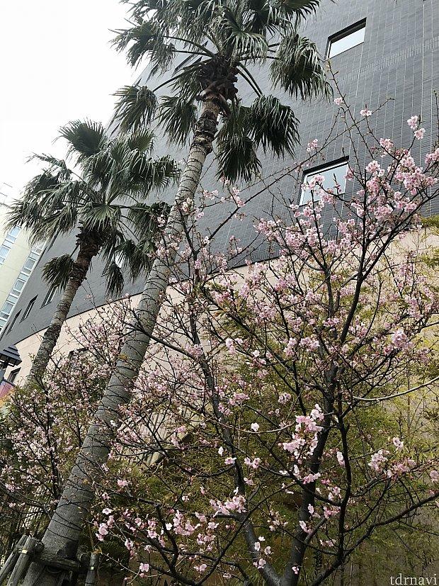 春が近づいていますね♪
