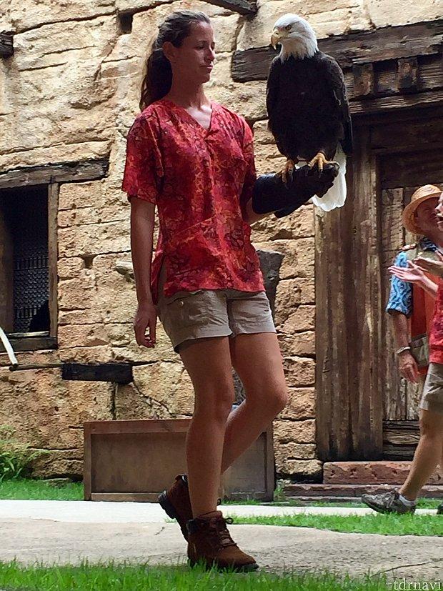 本当に大きくて立派な鳥です。なかなかこんなに身近で見られる機会はないと思います。写真よりも実際の方が巨大に見えました。眼つきも鋭い!色々な珍しい鳥達が観られて、しかもみんな芸達者達ばかりでほのぼのと出来るショーでした。