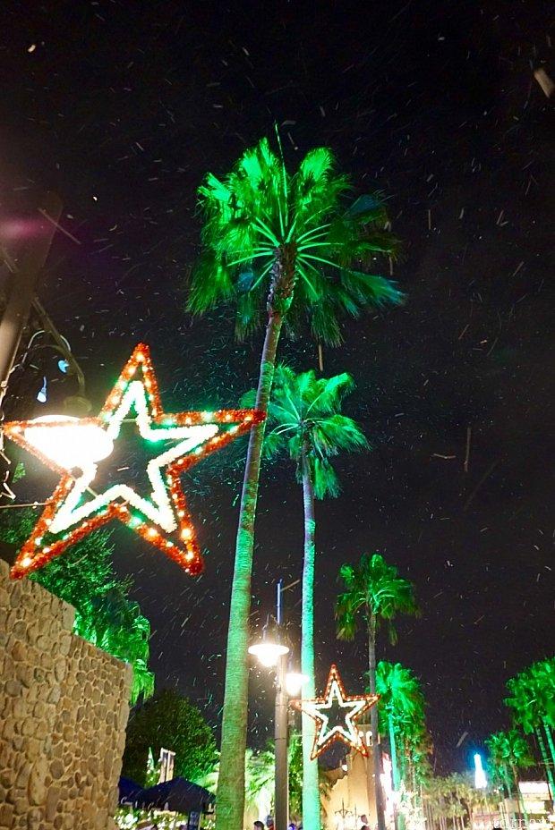 椰子の木と雪。不思議なコンビネーション。
