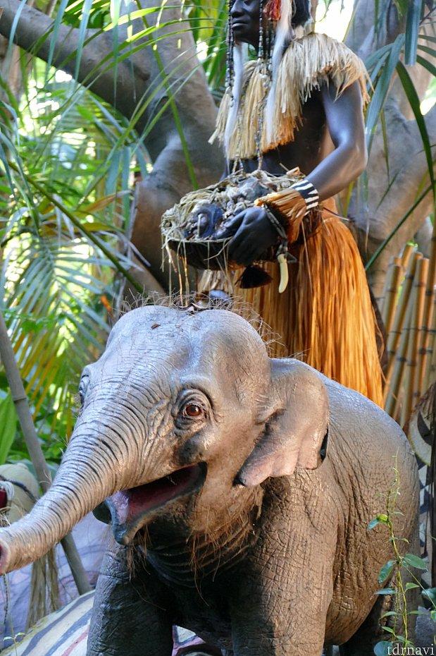 サムの隣にいた可愛い子ゾウ。お鼻からシューシューでる鼻息が最高にキュートでした💓