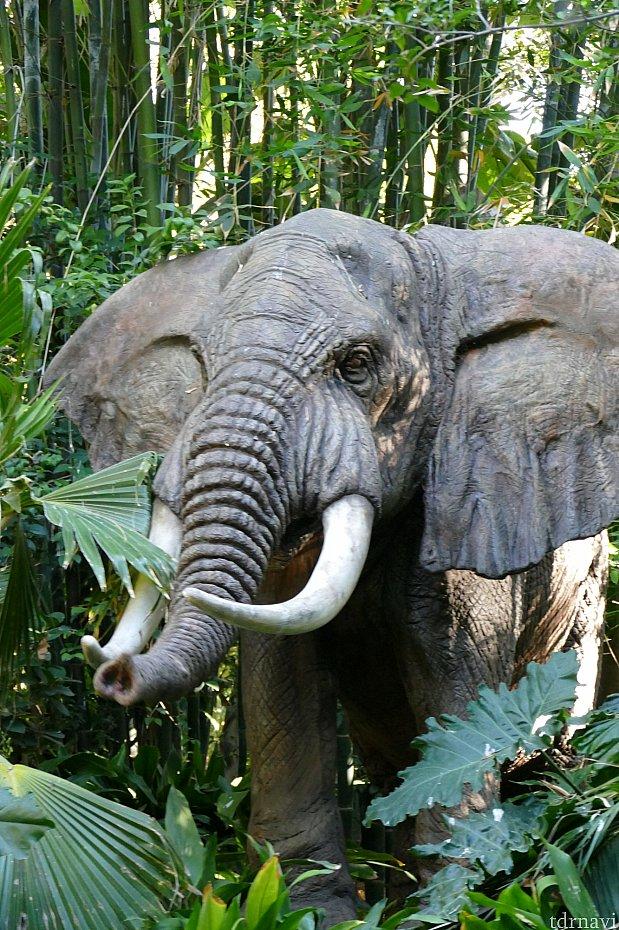 大きなアフリカ象