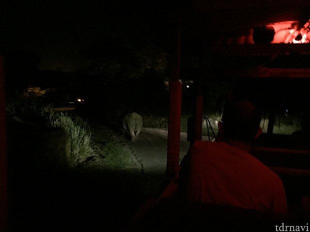 暗い上に車で常に動いているので、撮影がとても難しいです。