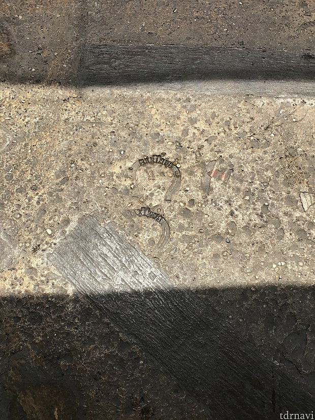 マキシマスの足跡?