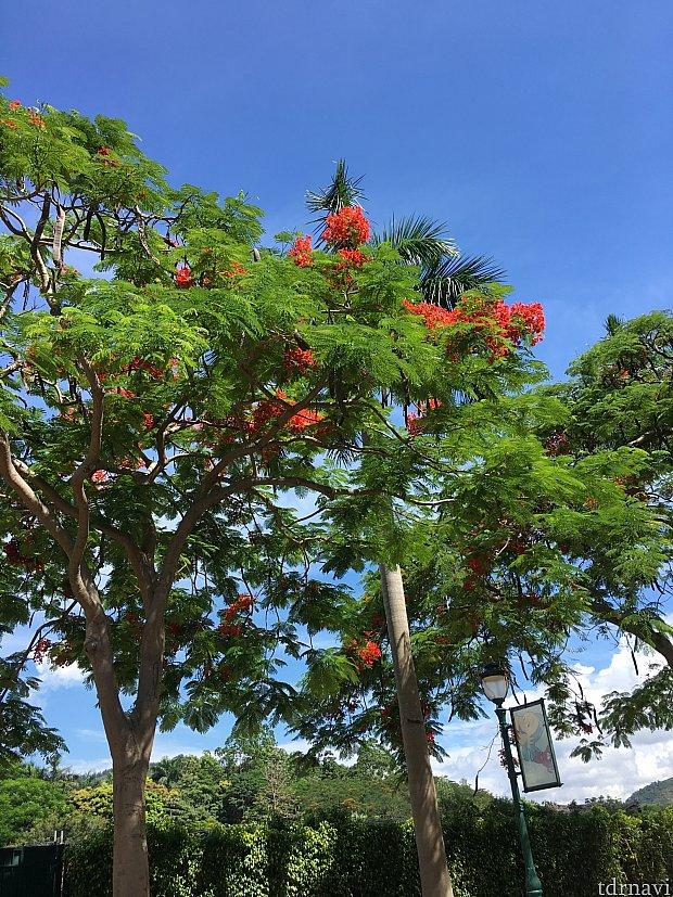 きれいな赤い花が青い空に映えます。