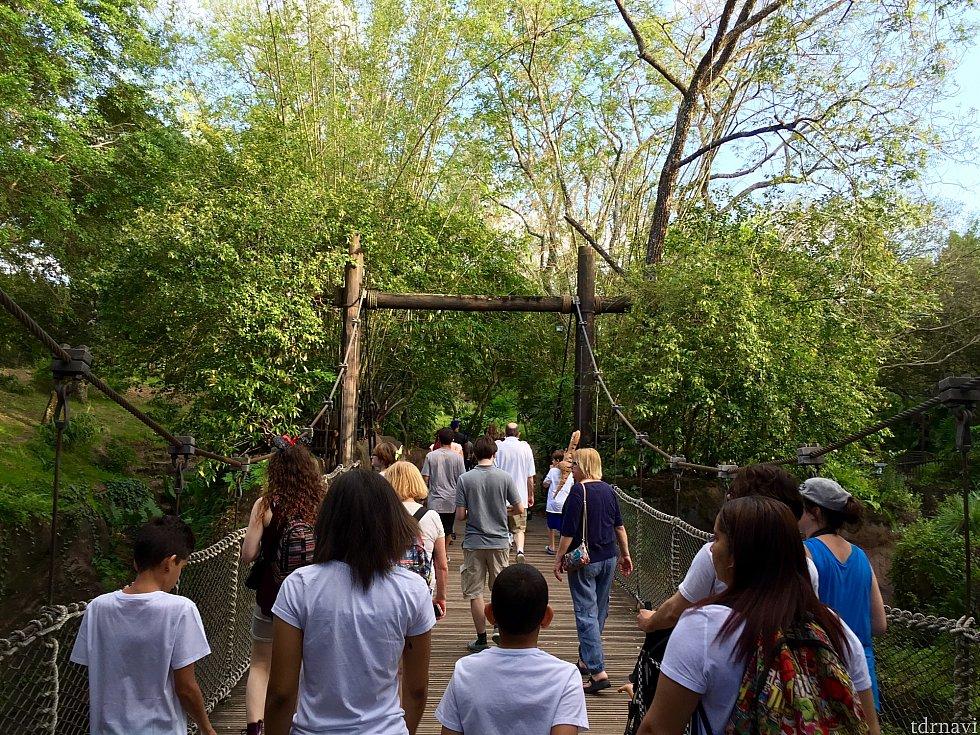 トレイルには吊り橋まであります。