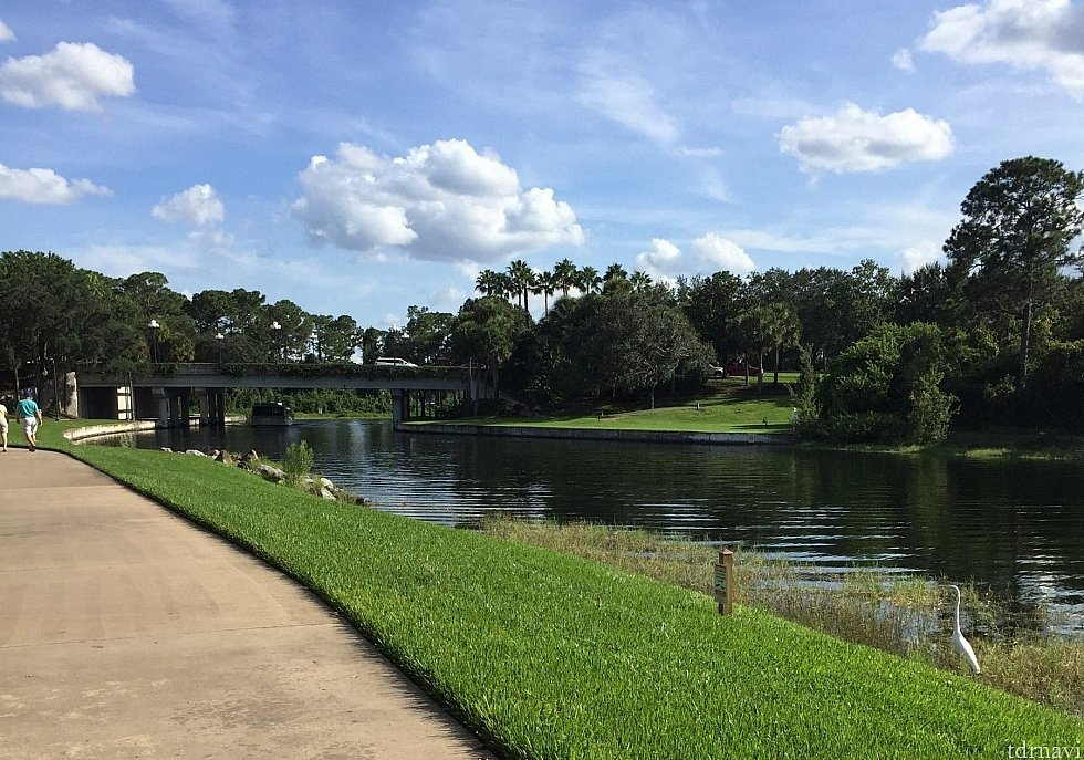 徒歩でハリウッドスタジオへむかう道。川沿いを歩いてると、リスや白鳥?がいます。