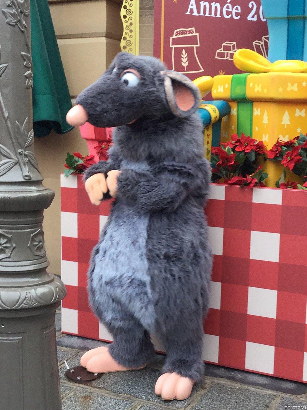 お店の向かい側でレミーのグリーティングやってました クリスマス限定の様です