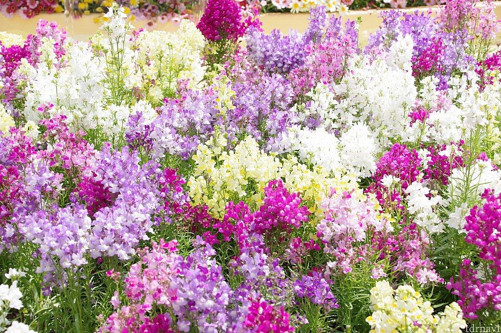 噴水前には色鮮やかな花々が。