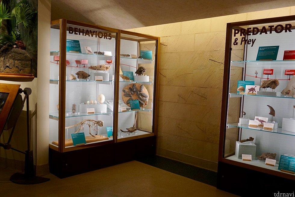 ダイノ インスティチュート内には恐竜に関する展示物が。