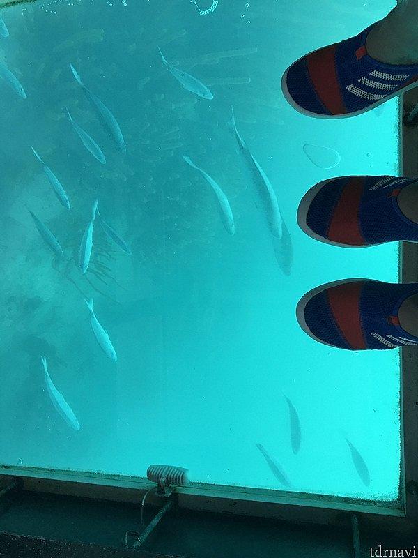 魚、いっぱい集まって来ています(笑)