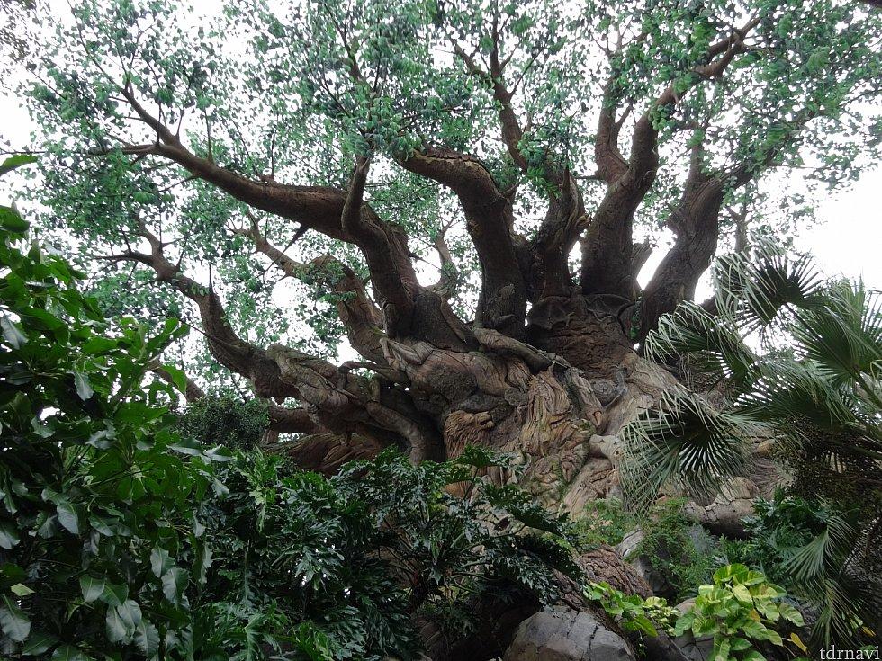 Tree of  lifeと呼ばれる木の中にアトラクションが入ってます。木の幹をよく見てみましょう。