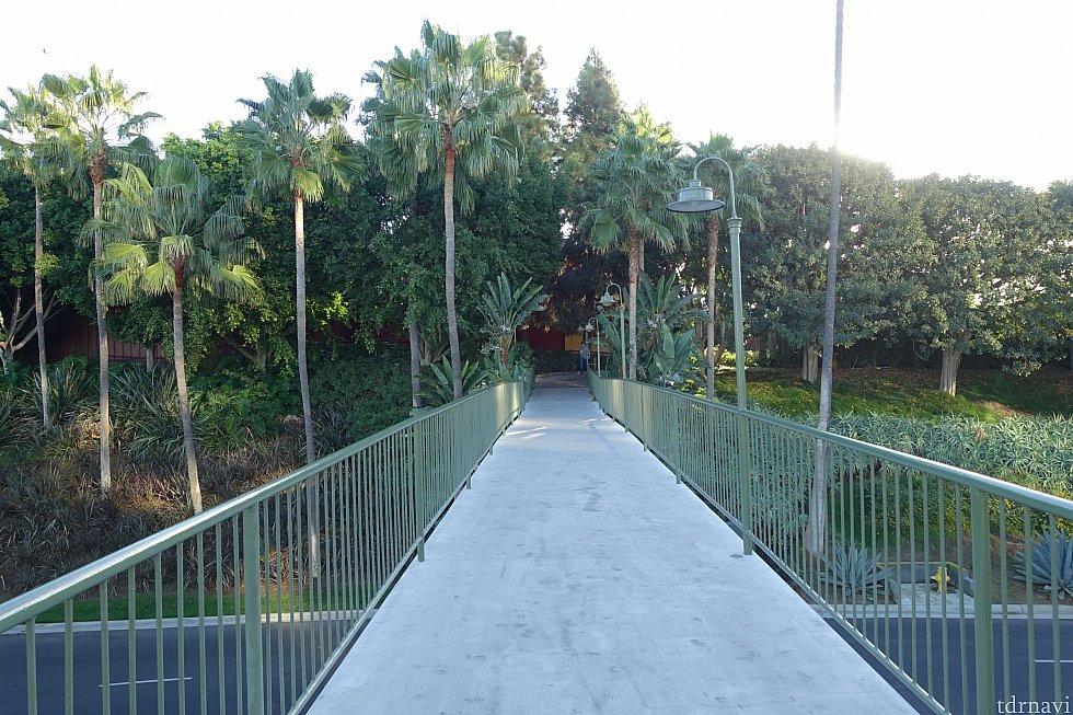 歩道橋を渡れば・・・