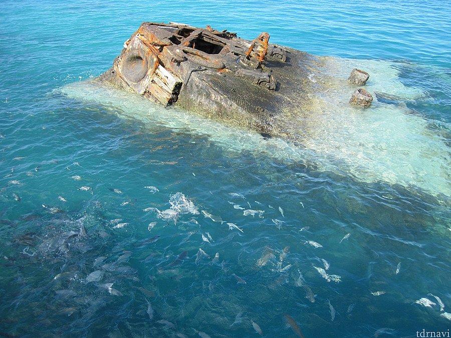 難破船、パン撒いてるので魚が…