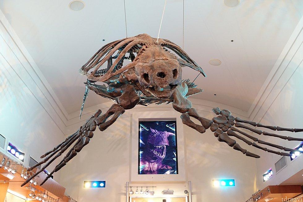 出口ショップには巨大な骨格が。