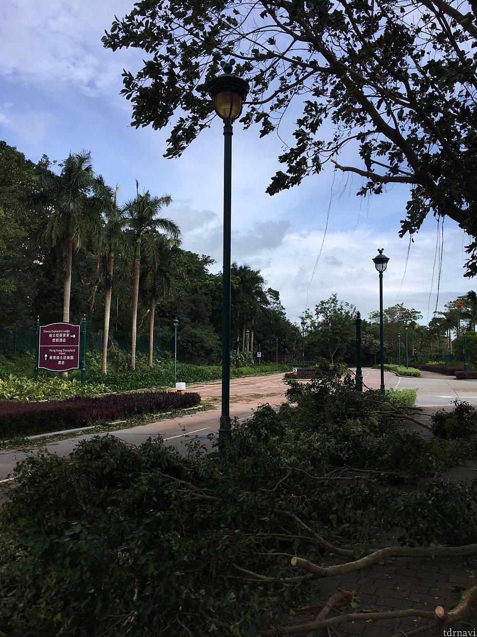 台風翌日のホテル前の道路ですが、椰子の木はほぼなぎ倒されていて、車道や歩道を塞いでました。