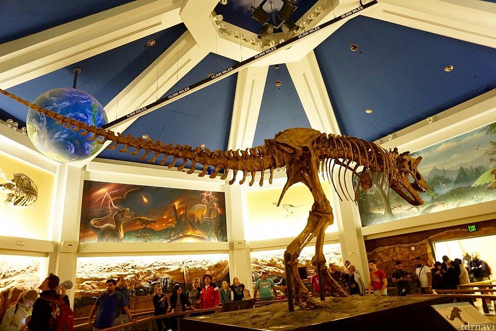 この恐竜は肉食で白亜紀に存在していたようです。大きさと骨格をよく覚えておいてください。後で出会うかもしれませんので。