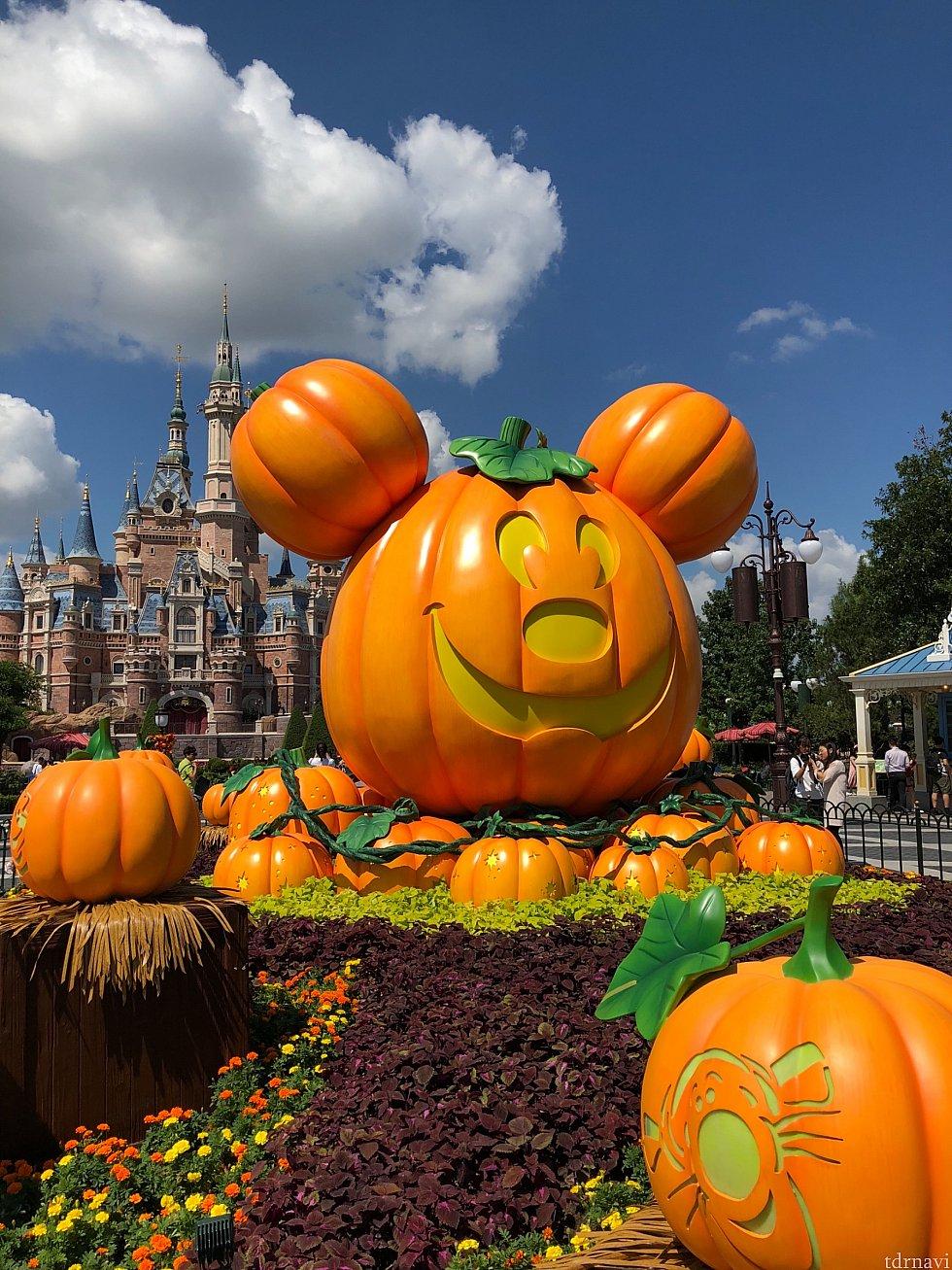 かぼちゃが豊作!