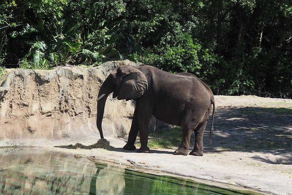 1回目…ゾウは元気に過ごしていました。