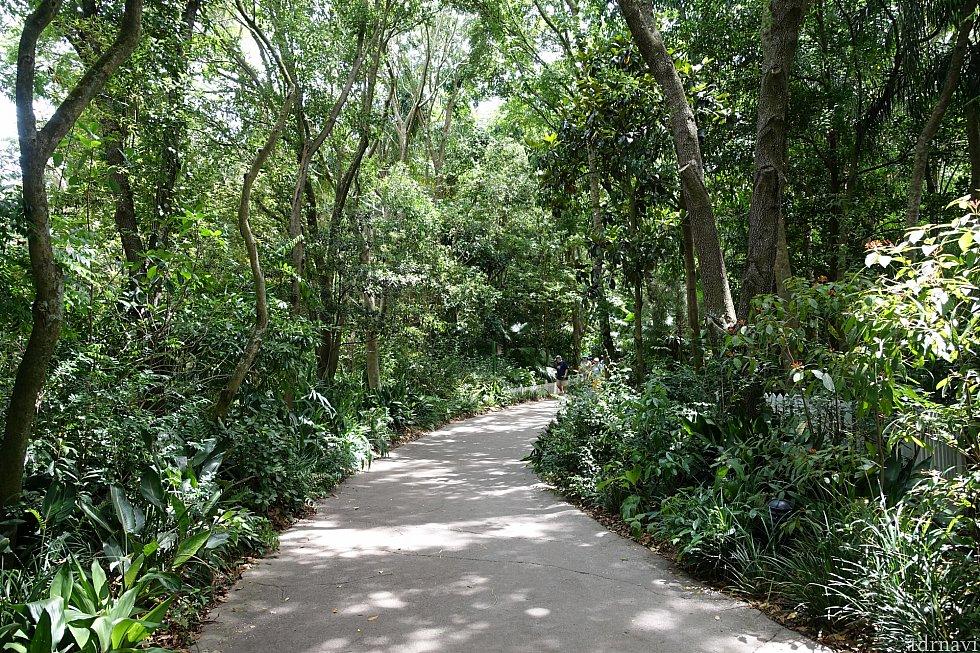 ジャングルの中を進みます。