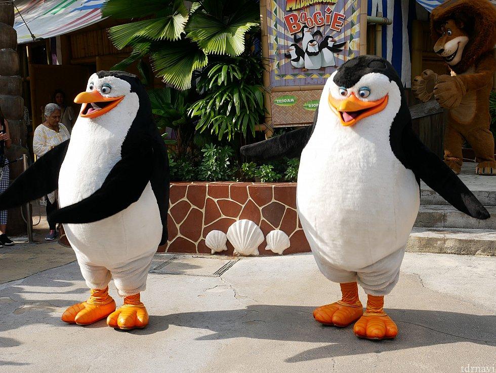 ペンギンズたちも