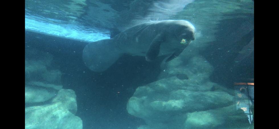 アトラクションと一体となっている水族館がすごいんです!