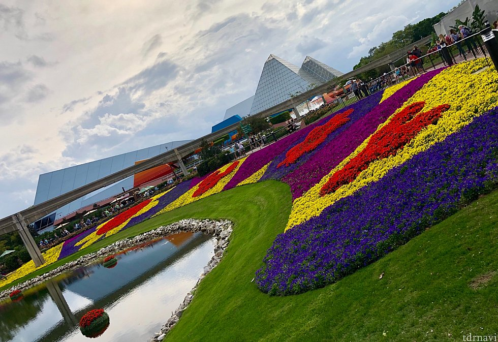 花ってこんなに鮮やかなんだ!っていつもこのフェスティバルに来ると思います。凄いお花畑。もちろんミッキーシェイプになっています。