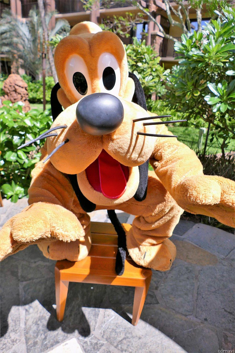 プルートとミニーちゃんは、テーブルまでご挨拶に来てくれます♪プルートは、椅子に乗ってご機嫌でした!