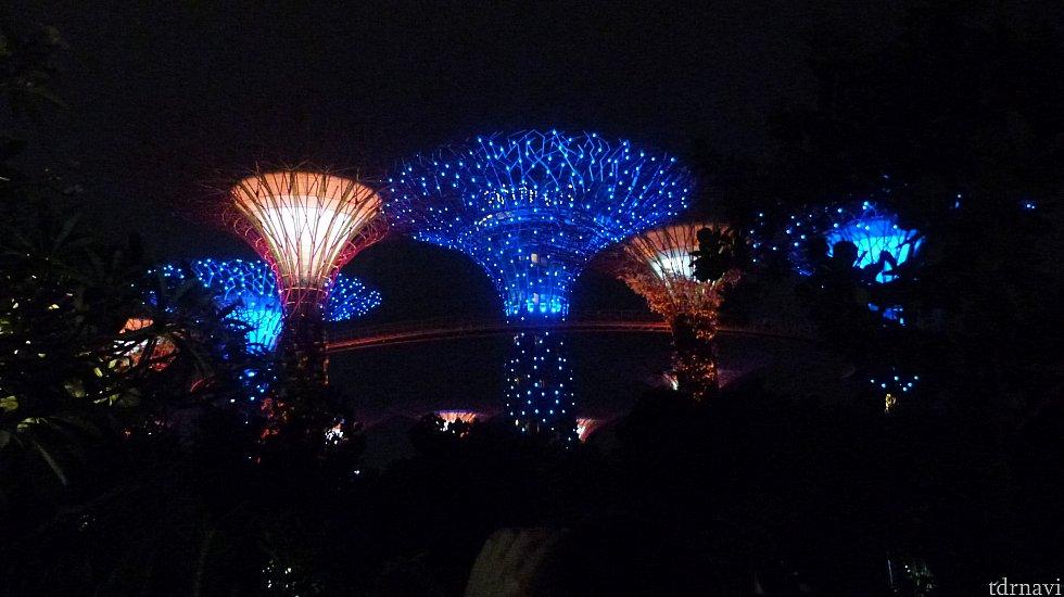 夜は幻想的な植物園になります