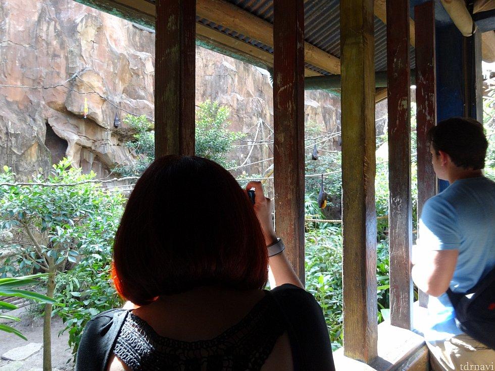 コウモリの鑑賞スペースには柵がない!