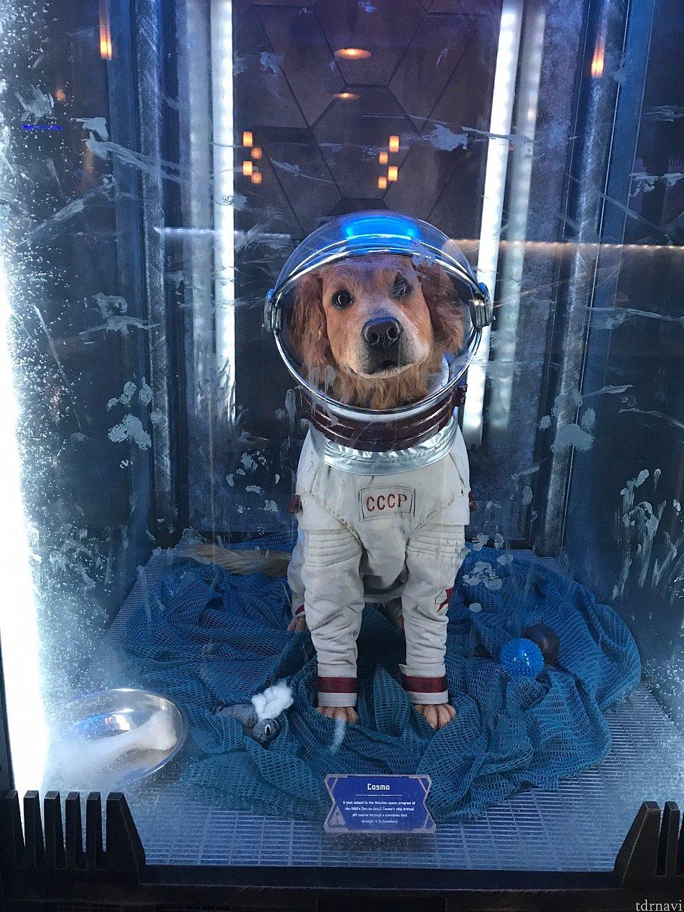 映画にも登場する宇宙犬コスモです♪動いていてかわいい♪左に飾られてるのでスタンバイに並ばないと見えないです(>_<)